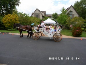 Horse Drawn Cinderella Carriage !