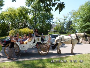 Horse Drawn Cinderra Carriage !