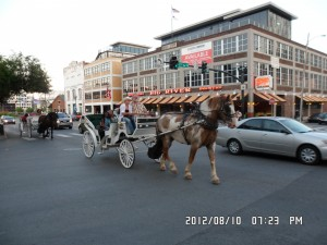 Horse Drawn Carriage Tours Nashville TN !