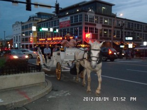 Horse With Carriage !