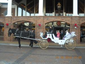 Horse Drawn Carriage Rides !