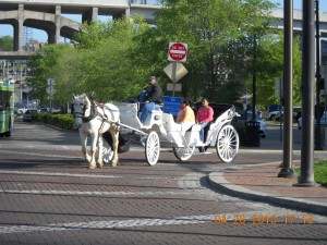 Horse And Carriage Rides !